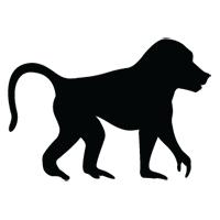 singe type babouin