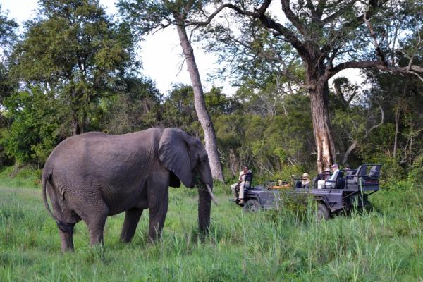 un 4x4 en safari est arrêté devant un gros éléphant curieux