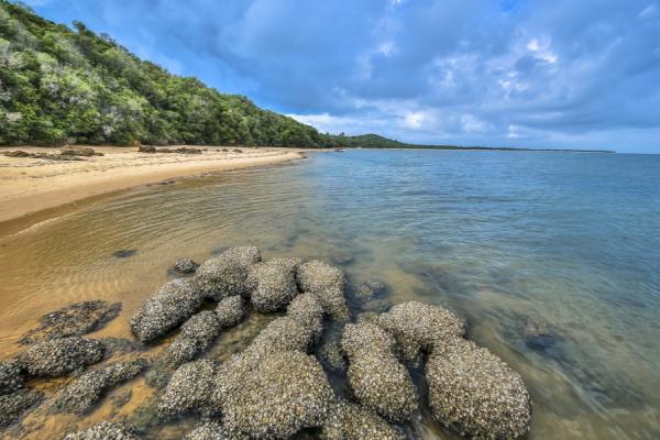 zoom sur l'eau translucide des plages du mozambique