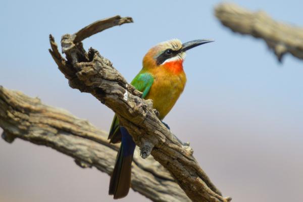 De profil, perché sur une branche, un bel oiseau multicouleur