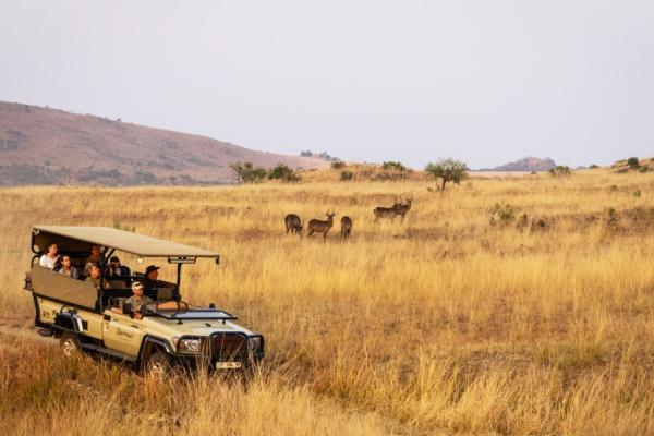Safari en 4x4 dans le bush avec des cobes à croissant en arrière plan