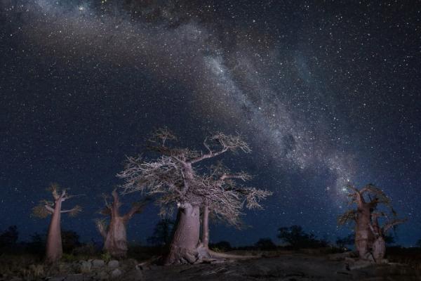 une nuit étoilée dans la région des pans sous les baobabs