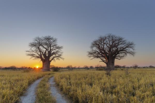 la région des pans et ses baobabs au coucher du soleil