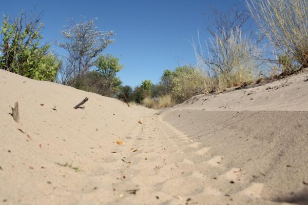 traces de pneus dans le sable lors d'un road trip au botswana