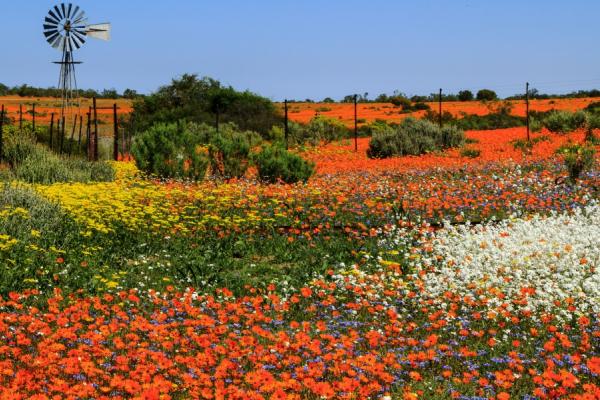 plaine colorée recouverte de fleurs rouges et jaunes au printemps