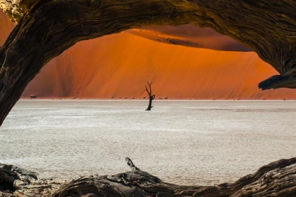 les dunes rouges de Sossusvlei et sa végétation : l'acacia erioloba