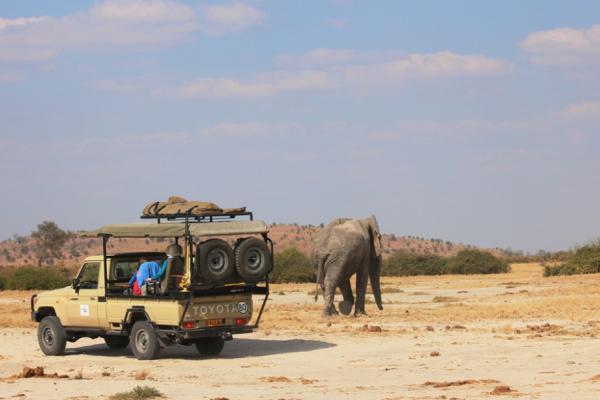 un éléphant a demi eau profite de son bain face camera