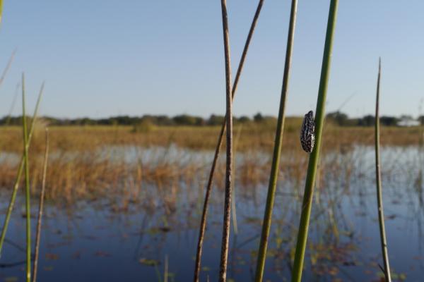 une grenouille dans son écosystème lors d'un safari dans l'eau