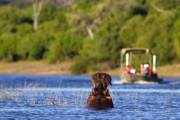 un hippopotame dans l'eau avec des voyageurs en safari bateau