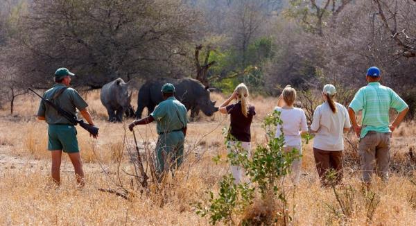 safari à pied où voyageurs et rangers admirent deux rhinocéros