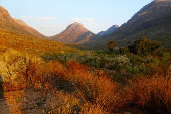 itinéraire dans le cederberg au cœur d'une nature diversifiée