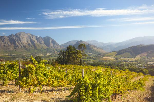 Vue sur Franschhoek et ses vignobles surplombés de montagnes