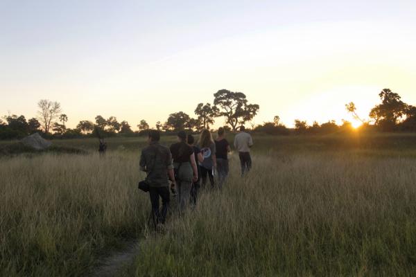 Safari à pied pour ces cinq personnes marchant en file indienne