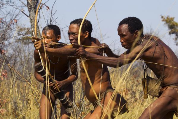 Trois bushmen sont en train de chasser avec des arcs