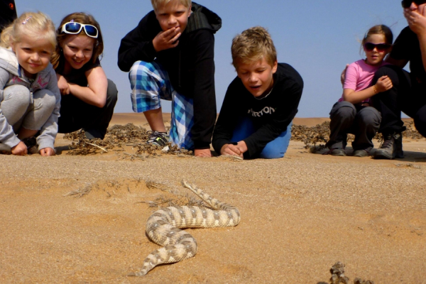 Petits et grands observent un serpent qui file à travers le sable