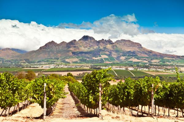 Belles vignes de Stellenbosch avec en toile de fond les montagnes