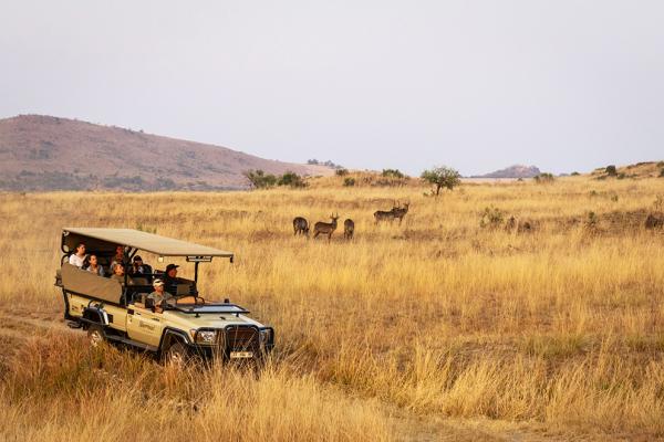 Un safari en 4x4 dans le bush au sein de la réserve privée de Nkomazi