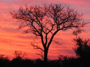 arbre sans feuillage derrière un ciel rouge au coucher de soleil
