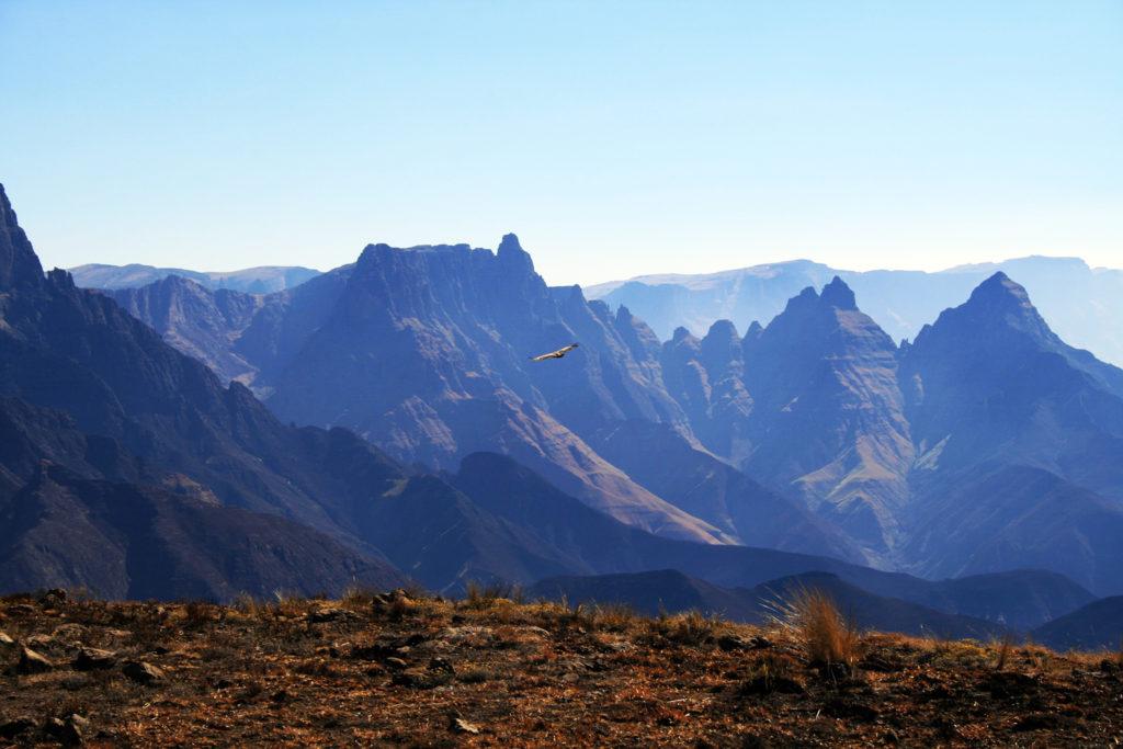 Un oiseau survole les montagnes escarpées de Cathedral Peak