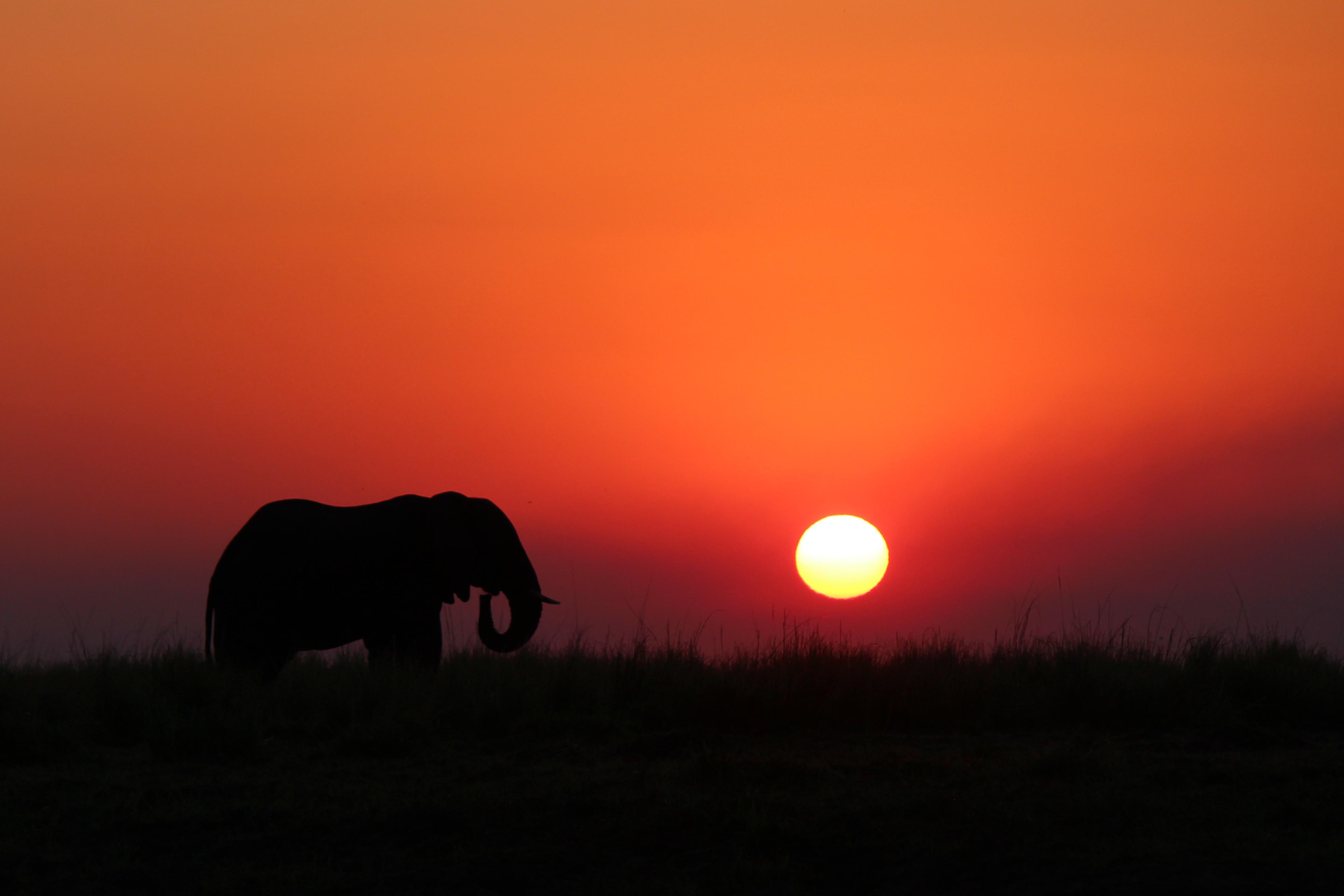 Un éléphant traverse le paysage devant un magnifique coucher de soleil rouge