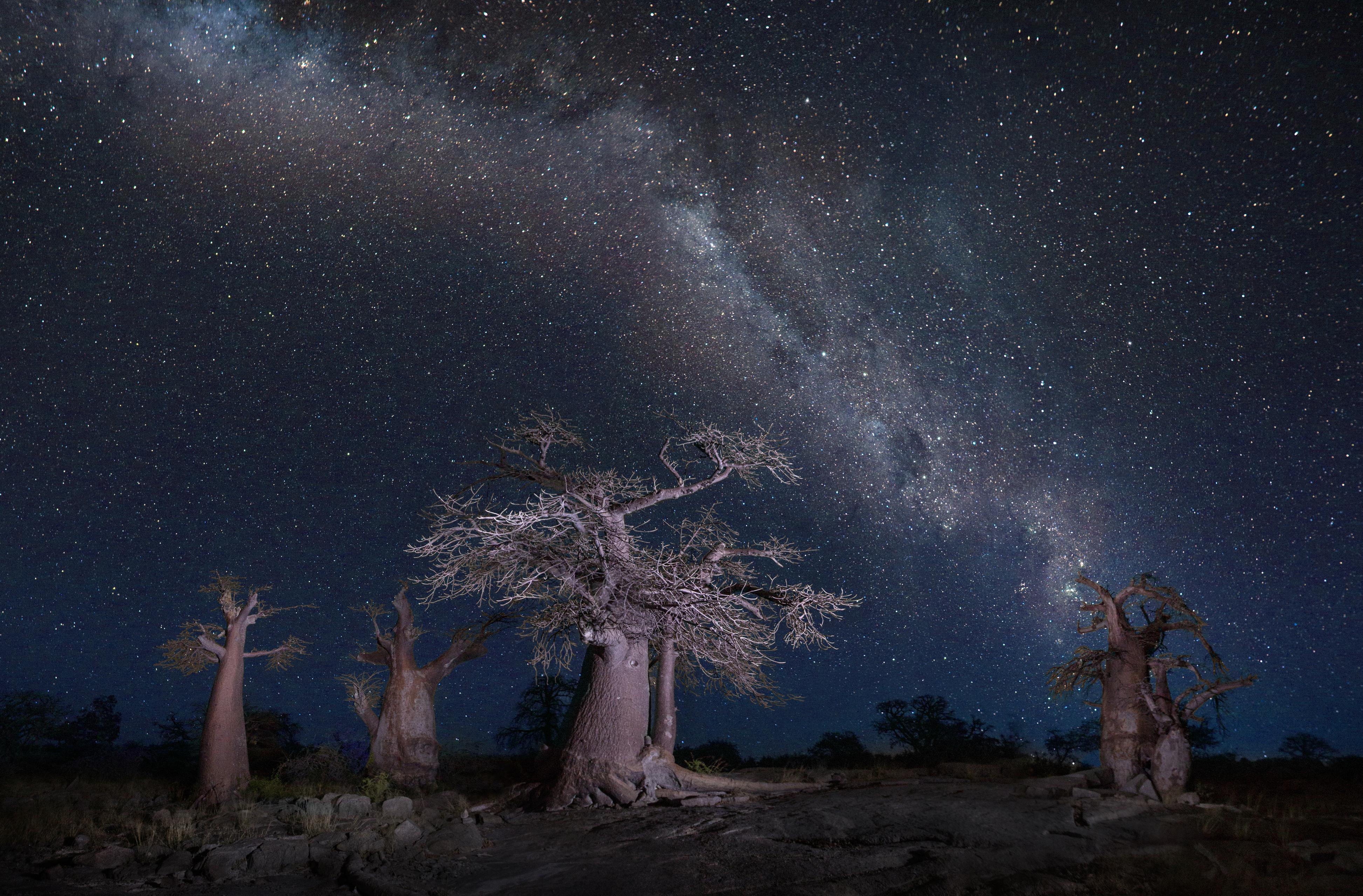 Magnifiques baobabs posant fièrement face a l objectif lors d'une nuit étoilée