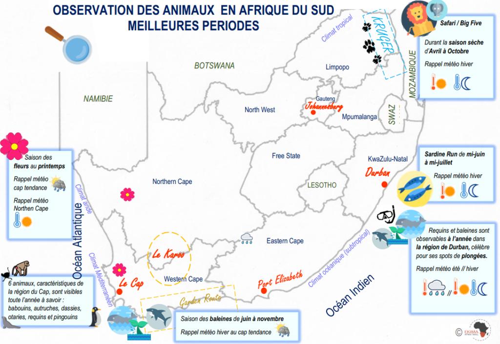 carte d'Afrique du sud avec les animaux et leur période d'observation