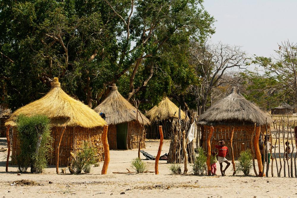 Entourées d'arbres, quatre huttes d'un village traditionnel de Caprivi