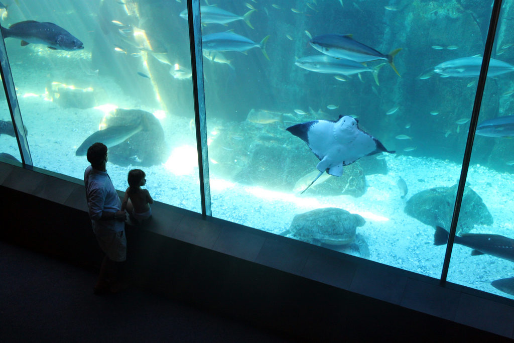 Deux personnes observe un immense aquarium avec raies manta et autres poissons
