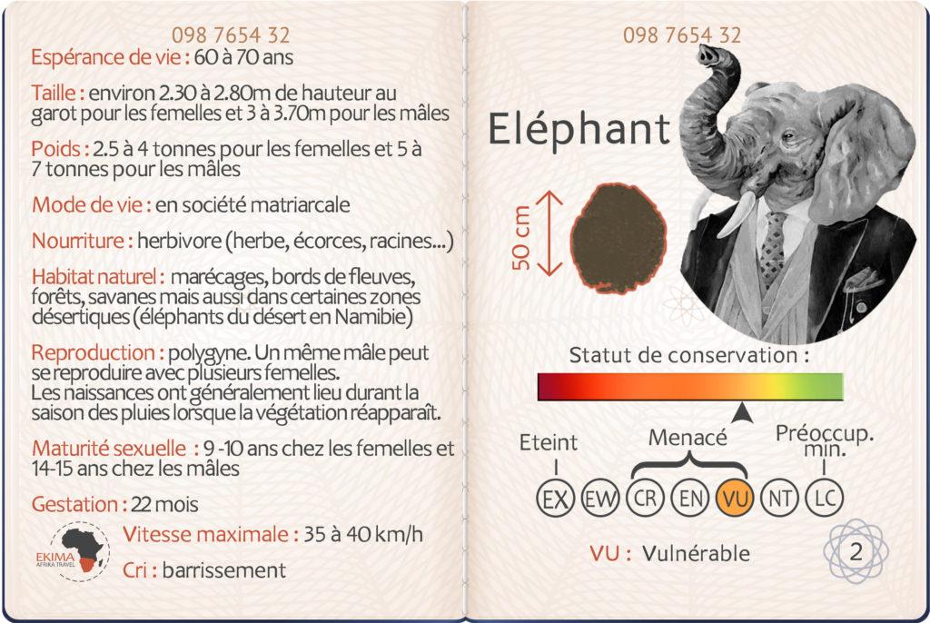 Safari en Afrique australe, fiche info de l'éléphant