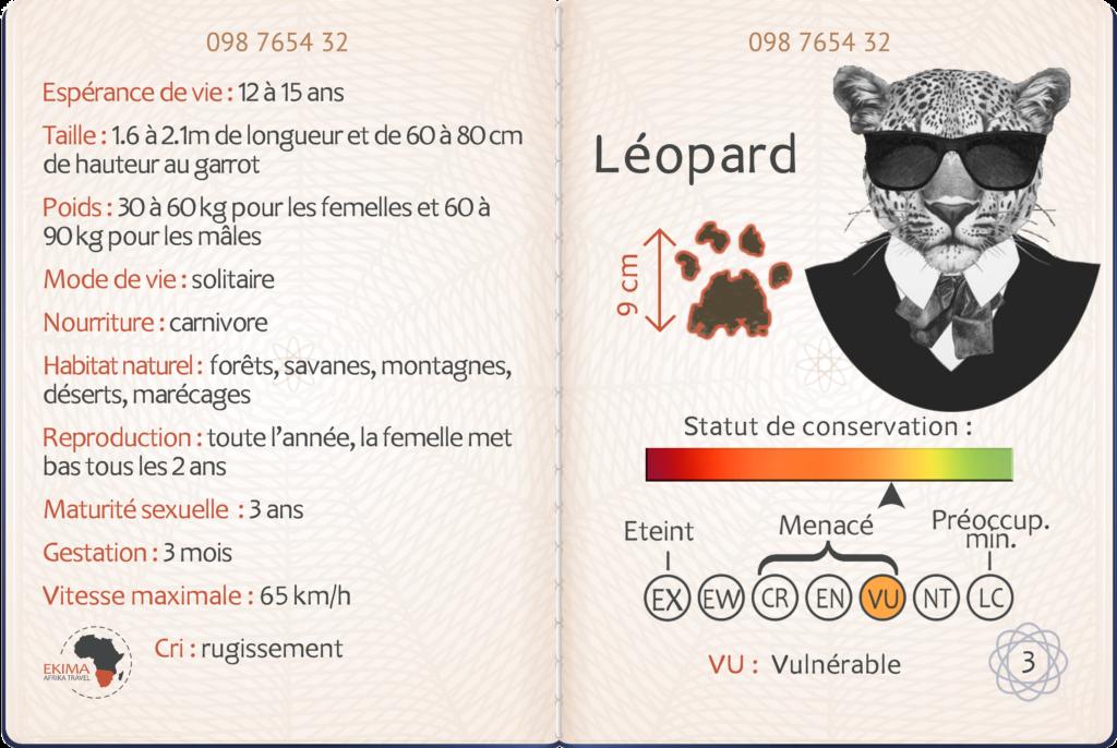 Safari en Afrique australe fiche info du léopard