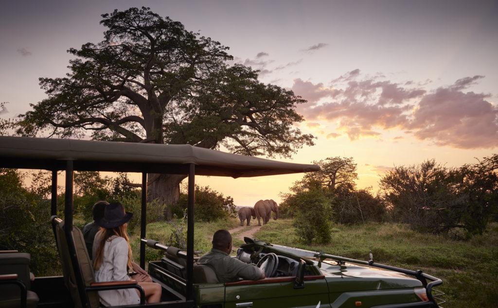 A bord d'un quatre-quatre, un couple en safari observe deux éléphants