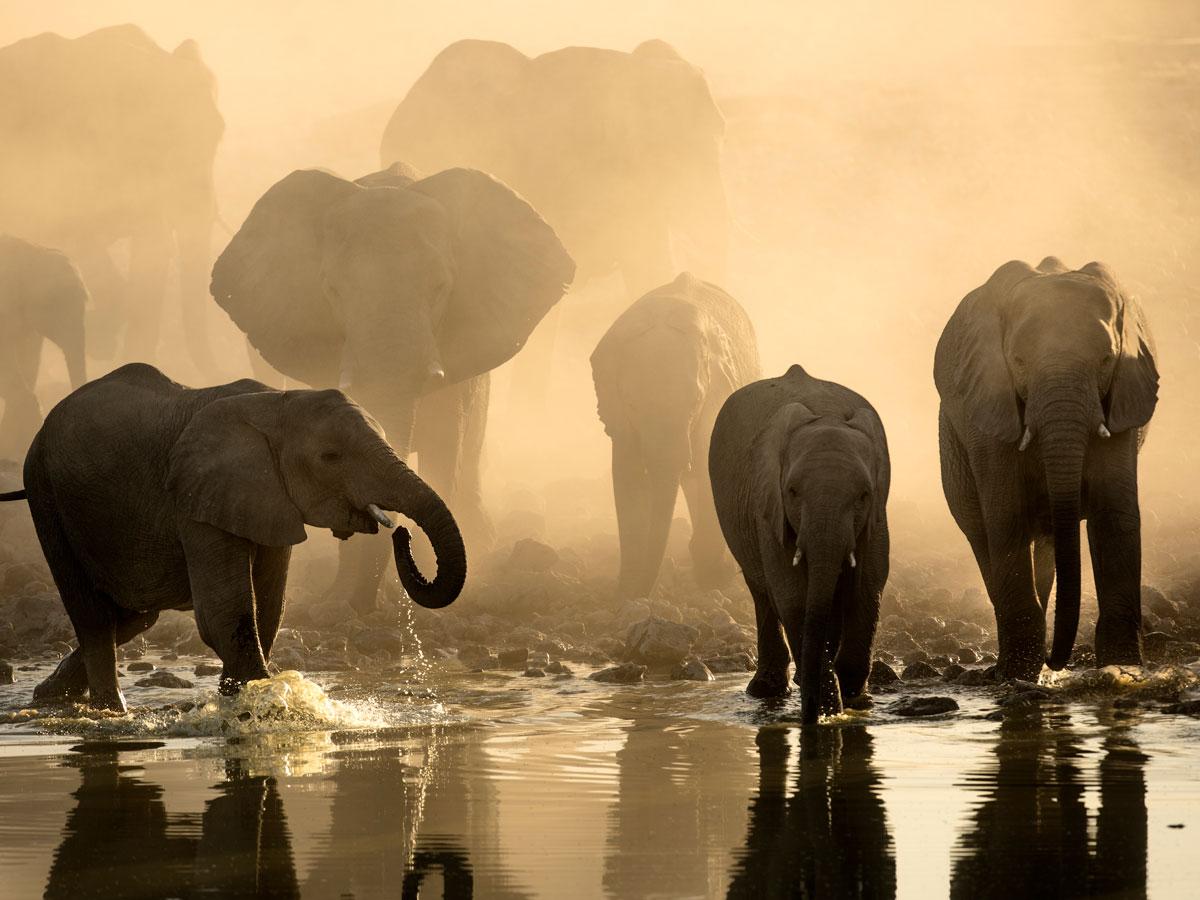 Un troupeau d'éléphants en train de s'abreuver dans la brume terreuse