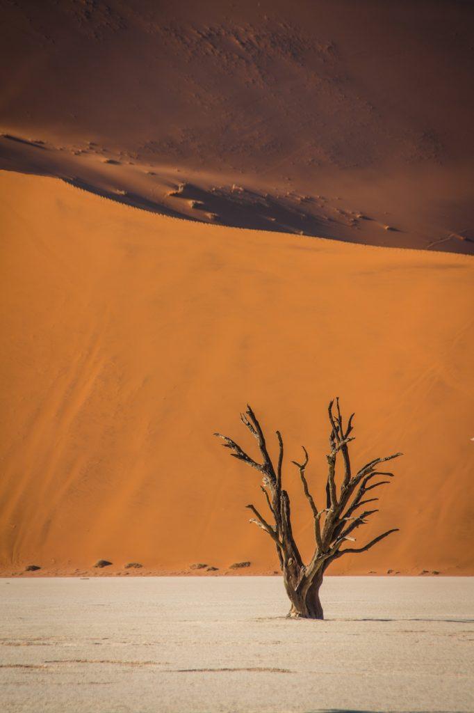 Zoom sur un arbre mort avec pour toile de fond les dunes de Sossusvlei