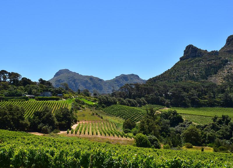 Paysage de Constantia avec ses montagnes, ses vignobles et sa verdure