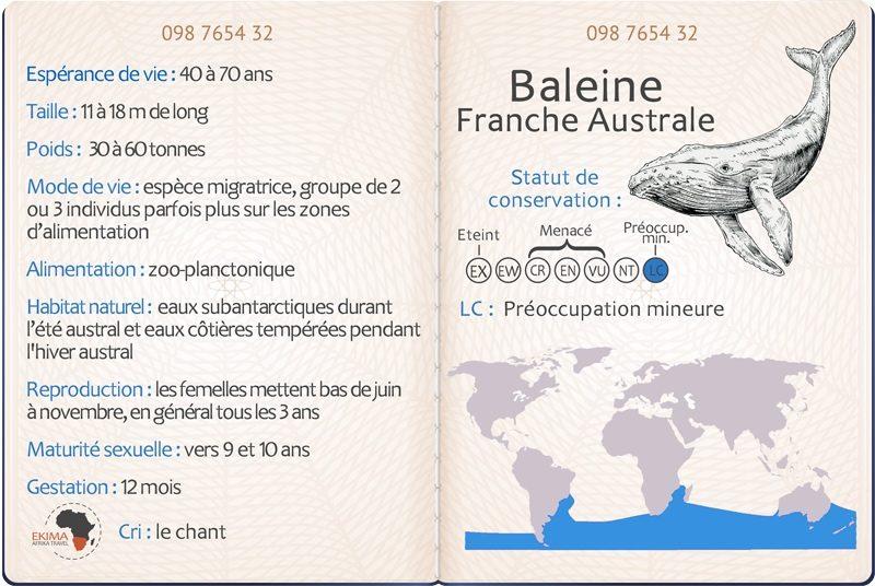 Passeport de la baleine franche australe comprenant ses informations