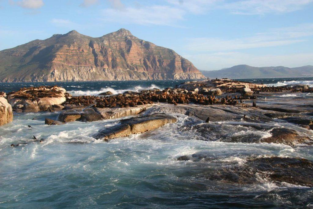 Vue sur l'île de Duiker et sa colonie d'otaries à fourrure du Cap