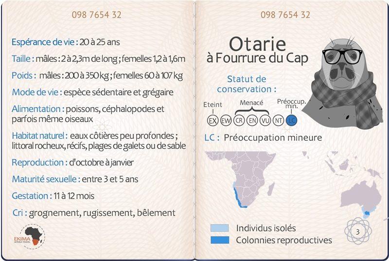 Big 5 des océans : passeport de l'otarie à fourrure du Cap avec info
